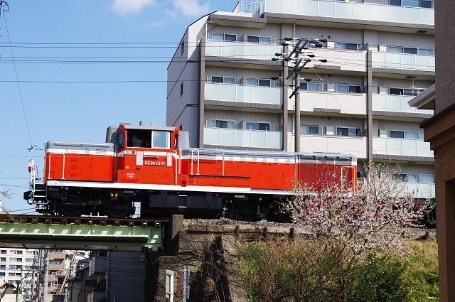 IMGP3622 (2)