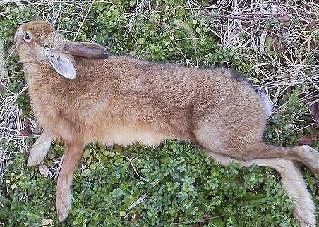 ウサギ20170313