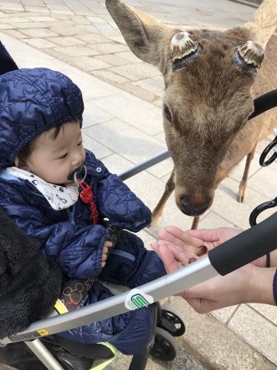 2017-2-26 奈良公園  5
