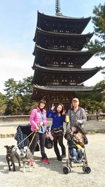 2017-2-26 奈良公園  3