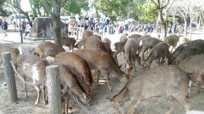 2017-2-26 奈良公園  4