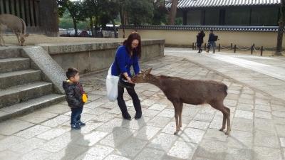2017-2-26 奈良公園  6