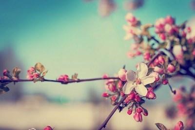 春 (400x267)