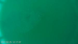スクリーンショット 2017-02-27 111053 ヒラメ銀座のヒラメ