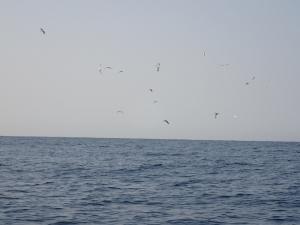 P3190013 鳥山と遭遇