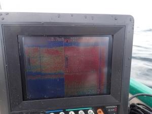 P3250005 浅場はイワシ接岸中