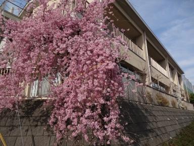 学びの館桜