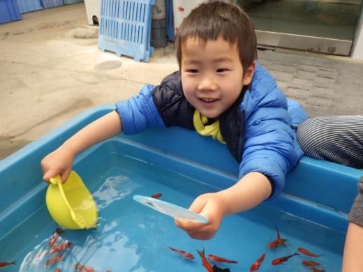 金魚が流行り (12)