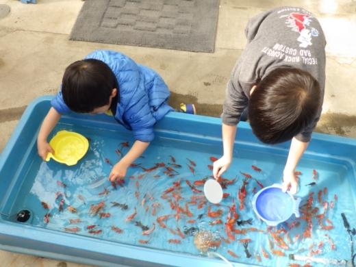 金魚が流行り (11)
