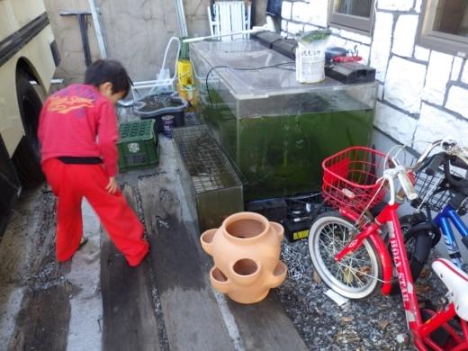魚の隠れ家 (6)