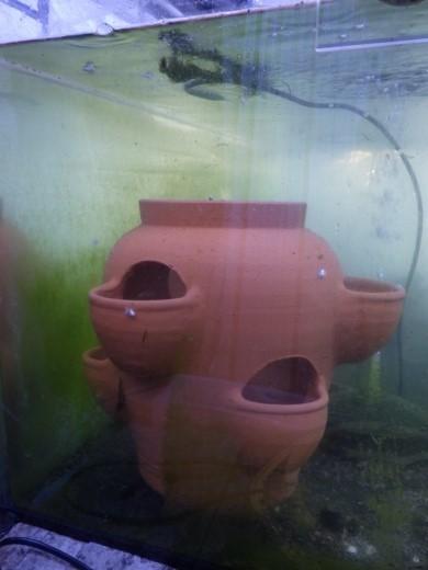 魚の隠れ家 (10)