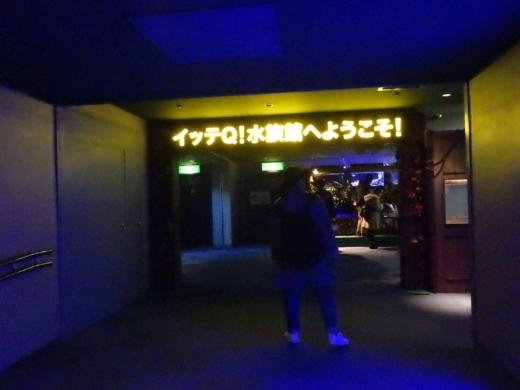 八景島シーパラダイス (34)