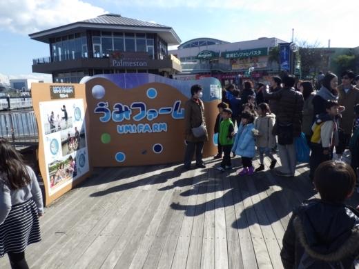 シーパラ釣り堀 (3)