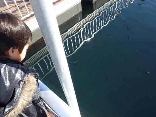 シーパラ釣り堀 (8)