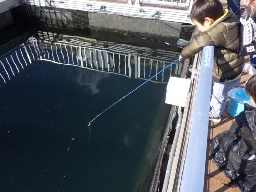 シーパラ釣り堀 (11)