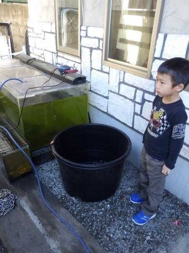 カブトムシ小屋作成 (7)