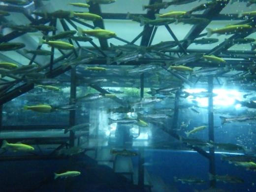 森の中の水族館 (18)