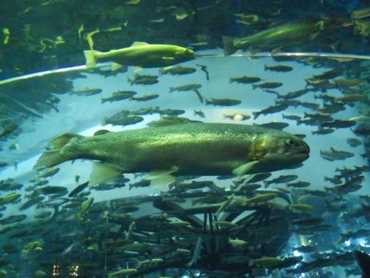 森の中の水族館 (19)