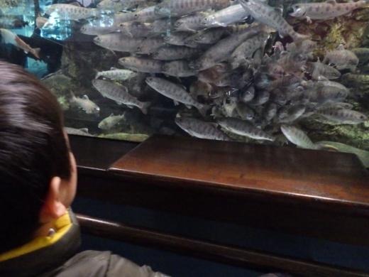 森の中の水族館 (24)