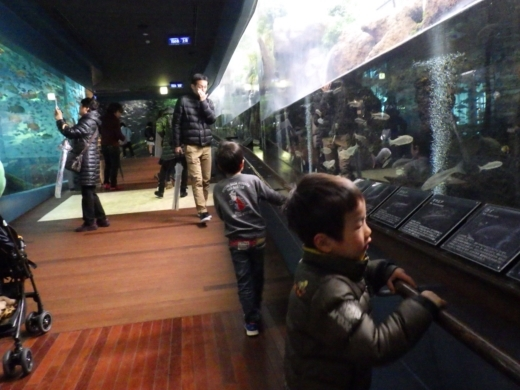 森の中の水族館 (23)