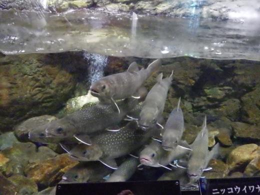 森の中の水族館 (29)