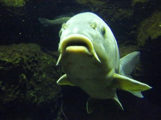 森の中の水族館 (28)
