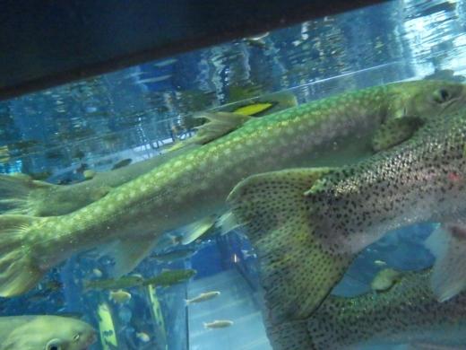 森の中の水族館 (34)