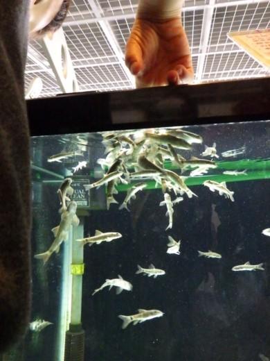 森の中の水族館 (41)
