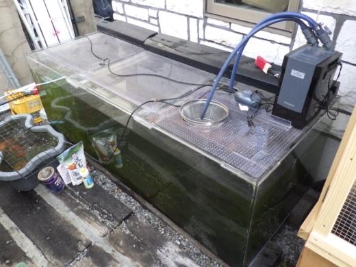 水槽の濾過 (23)