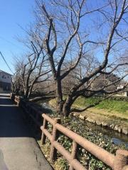 元荒川のさくら 田口不動産 2017