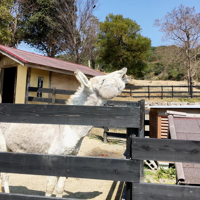 淡路島旅行イングランドの丘馬