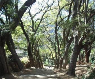マダガスカル公園の通路2