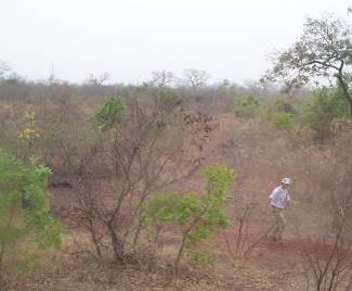 マリ国の土1