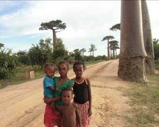 マダガスカルの思い出 バオバブ