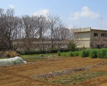 野菜畑の様子4月上旬