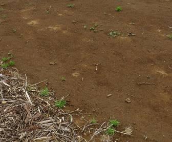 無耕起菜園の表層(春4月)
