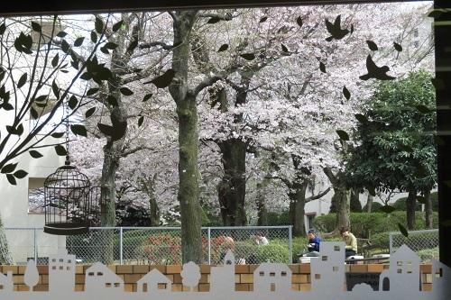 まちもりカフェ前の桜201704