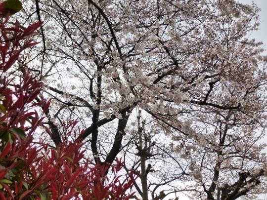 17_04_03-08kotsubo.jpg