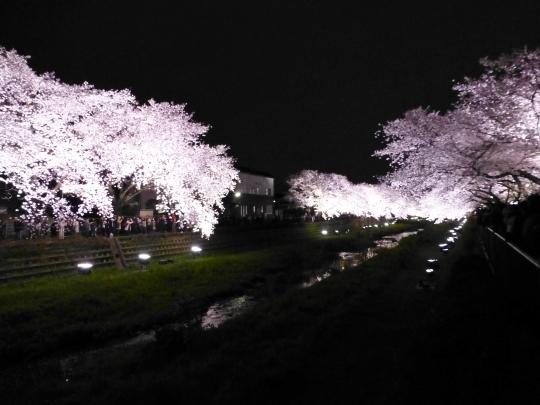 17_04_12-02nogawasakura.jpg