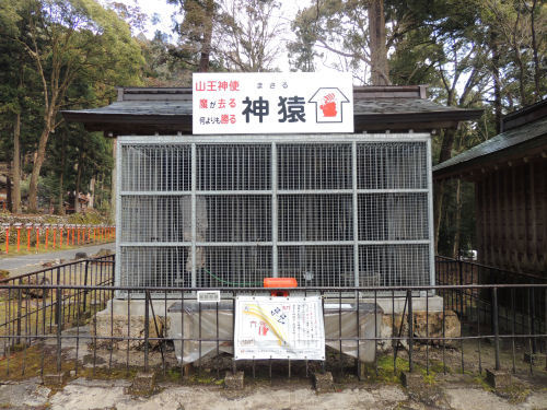 170327hiyoshi29.jpg