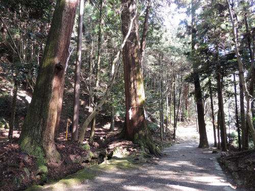 170329hiyoshi20.jpg