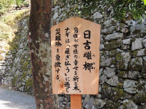 170329hiyoshi59.jpg