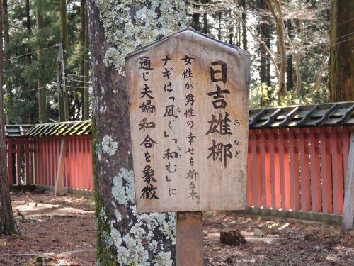 170329hiyoshi61.jpg