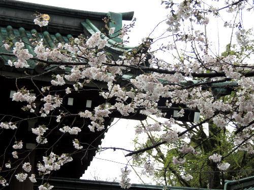 170410mishima24.jpg