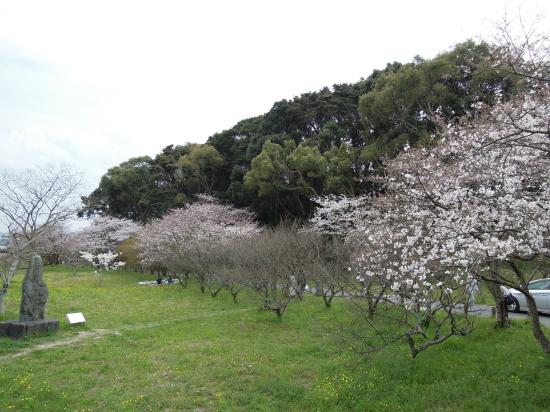大宰府政庁跡の桜170405-3