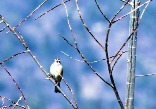 鳥 正面 2