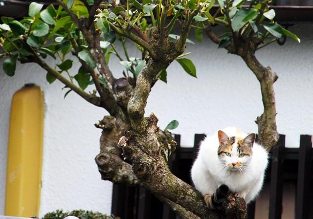 樹上の猫2