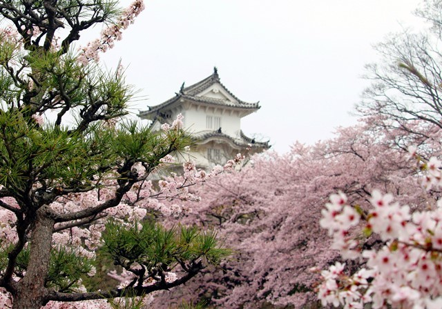 城と桜 13