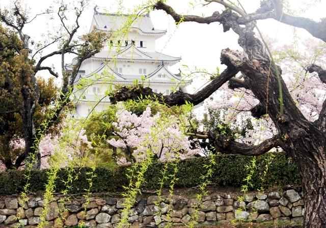 城と柳 1