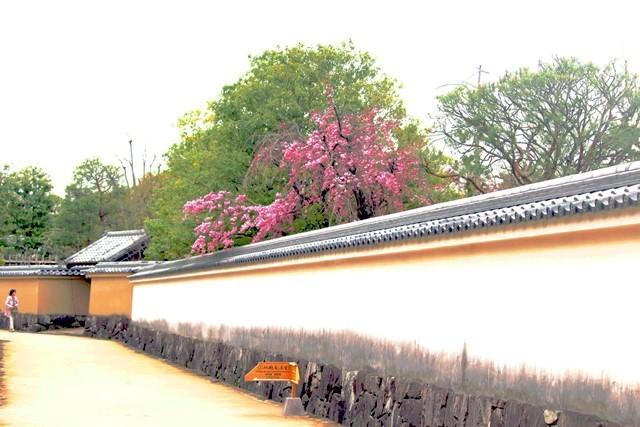 花と塀 2